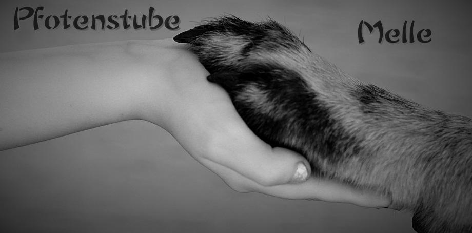Hundesalon Haustierservice Hundebetreuung Hundefriseur
